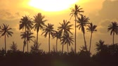 calm : Palm trees and sunset Stock Footage