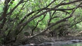 weather : A boat ride through a jungle Stock Footage