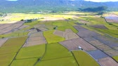 słoma : Aerial view of rice field .Taiwan.