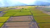 saman : Aerial view of rice field .Taiwan.
