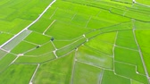 spring : Aerial view of rice field valley. taiwan.