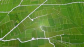 Aerial view of rice fields. Chishang. Taiwan