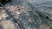 çöp : plastic bottles, bags, wastes floating in water. Sea ocean water pollution concept. Plastic pollution crisis