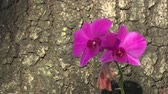 orkideler : pink orchid flower on trunk tree surface