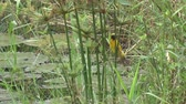 küçük kuş : asian golden weaver on green plant