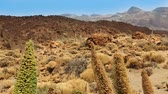 roques : Teide National Park in Tenerife at Canary Islands of Spain Stock Footage
