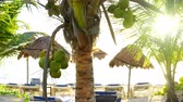 уборная : Coconut palm trees in Caribbean beach of Mayan riviera in Mexico