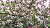 тычинки : Pink Flowers Blooming Peach Tree at Spring