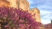 overview : Redbud tree in The Alhambra palace, Granada, Spain in spring Stock Footage
