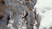 The sand martin (Riparia riparia) fly into the sand cliff. European sand martin or bank swallow
