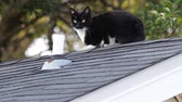 siyah beyaz : Stray cat with black and white fur on a rooftop.