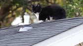 siyah beyaz : Black and White Stray cat sitting on a roof.