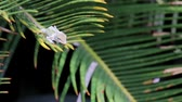 рептилия : Green Lizard on a palm tree leaf.