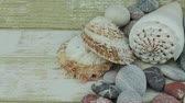 useful resources : Close up river shells and stones Stock Footage