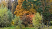 Panoramic view of beautiful autumn park