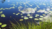 Лилли : Leaves Lilies Float On Lake Surfaces Where Reflect Sky And Clouds 4K