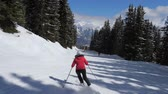on piste : Movement Back View Woman Skier Skis Down On Ski Slope Among Pine Forest