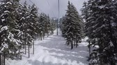 síelés : Chair Lift Rises To The Top Of The Mountain Through The Pine Forest At Winter Stock mozgókép