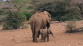 young elephants : African Elephant With A Baby Standing Backwards In The Savannah