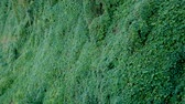 плющ : Overgrown With A Green Carpet On The Ground Surface On A Hillside