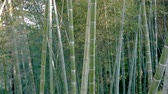 bambu : Matorrales De Alto Bosque De Bambú Archivo de Video