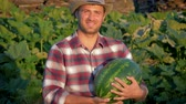 melão : Happy Farmer Keeps Ripe Watermelon On Plantation In Ranch Stock Footage