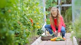 turp : Adorable little girl gathering crop of cucumbers, pepers and tomatoes in greenhouse.