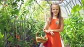 radis : Cute little girl collects crop cucumbers and tomatos in greenhouse