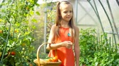 espinafre : Cute little girl collects crop cucumbers and tomatos in greenhouse