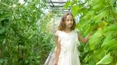 spinach : Adorable little girl harvesting cucumbers and tomatoes in greenhouse.
