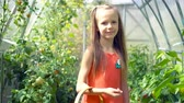 sweet pepper : Cute little girl collects crop cucumbers and tomatos in greenhouse