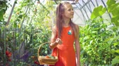 turp : Cute little girl collects crop cucumbers and tomatos in greenhouse
