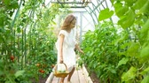 еда : Cute little girl collects crop cucumbers and tomatos in greenhouse