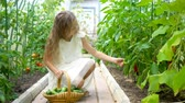 еда : Adorable little girl harvesting cucumbers and tomatoes in greenhouse.