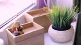 vensterbank : Green grass in a pot on the windowsill Stockvideo