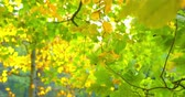 shallow depth field : Autumn Impressions - beautiful autumn park scene - ProRes Stock Footage