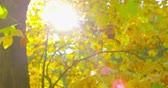 out of focus : Autumn Impressions - beautiful backlit autumnal foliage - completely defocused shot - handheld camera - OTS - ProRes Stock Footage