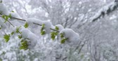 A sudden return of winter - snowy trees - ProRes