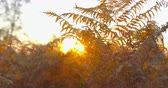 Autumn Impressions - beautiful autumn scenery in the backlight - ProRes