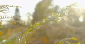 green area : Autumn Impressions - beautiful autumnal television in the backlight - camera pan - ProRes Stock Footage