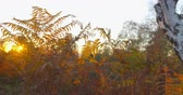Autumn Impressions - beautiful autumnal scenery at sunset - camera pan - ProRes