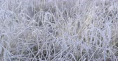 nazomer : Autumn Impressions - beautiful hoar-frosted grass on a cold morning morning - camera pan - ProRes