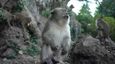 zoo : portrait of a monkey close-up outdoors. Stock Footage