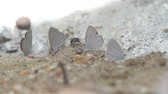 borboleta : butterflies and bees are searching and drinking mineral from soil