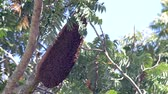 big bee hive hanging on the tree