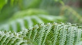 fern branch is moving with gently wind