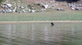 a black dog is resting in the water of the reservoir