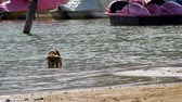 a puppy is drinking water close to the shipyard and walking away