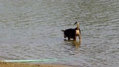 black dog and puppy are playing in the reservoir