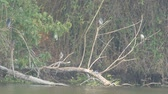 many herons are resting on the branch close to the reservoir